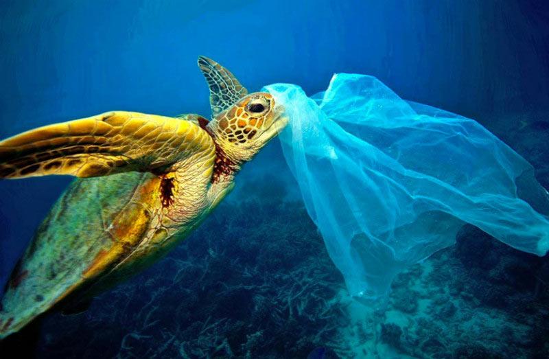 Plastico-oceanos-tortuga